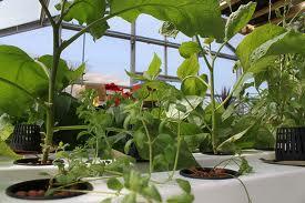 hydroponics growing